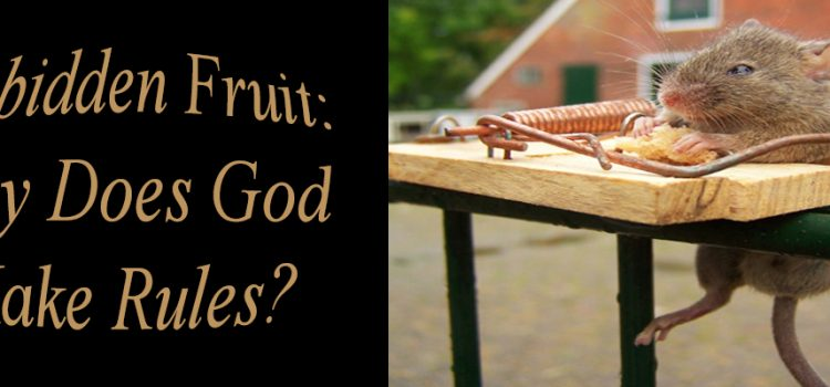 Forbidden Fruit: Why Does God Make Rules?
